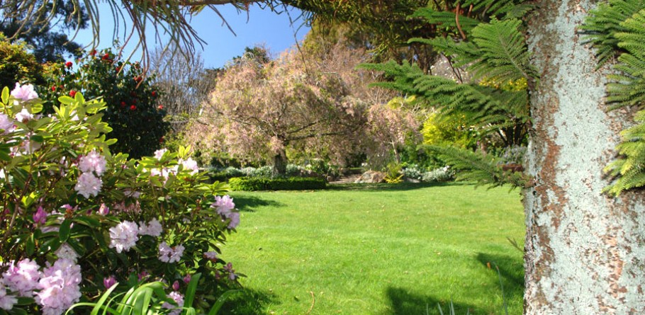 Thackwood Garden is nestled in a fourth generation, 300 acre Farm, situated just 14km north of Nelson City. A love of the land has lead to the development of a three-acre English Cottage Garden as creative as it is filled with magical fragrances and secrets to discover.
